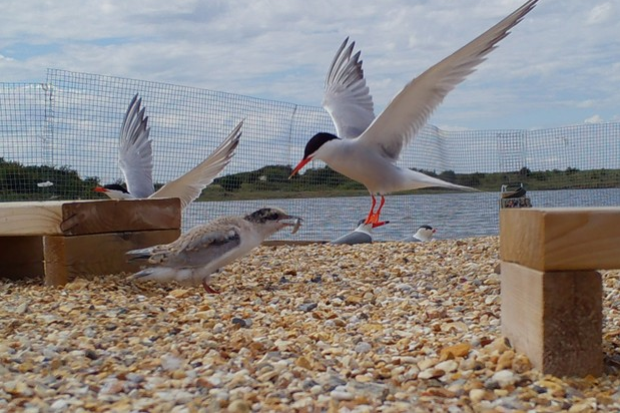 Gulls on a shingle beach with the sea in the background